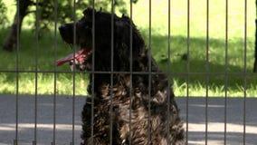 любознательная собака сток-видео