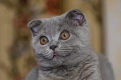 любознательний котенок Стоковые Фотографии RF