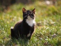 любознательний котенок Стоковая Фотография
