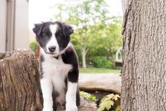 любознательний щенок Стоковая Фотография RF