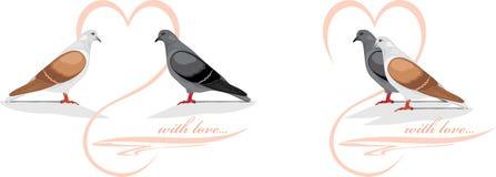 2 любящих голубя Стоковая Фотография RF