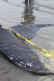 Ювенильные мыть кита Humpback ashore и умерто стоковая фотография