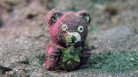 Ювенильные рыбы Teddybear Стоковые Фотографии RF