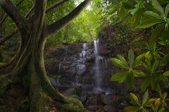 Юговосточные азиатские джунгли с водопадом Стоковые Изображения