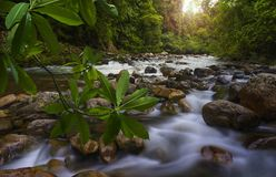 Юговосточные азиатские джунгли с рекой Стоковые Фото