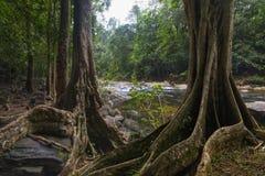 Юговосточные азиатские джунгли с рекой Стоковое фото RF