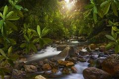 Юговосточные азиатские джунгли с рекой Стоковое Изображение RF