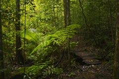 Юговосточные азиатские джунгли Стоковые Фото