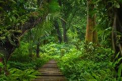Юговосточные азиатские джунгли Стоковые Фотографии RF