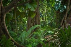 Юговосточные азиатские джунгли Стоковое Изображение RF