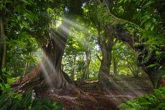Юговосточные азиатские джунгли Стоковые Изображения RF
