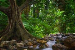 Юговосточные азиатские джунгли Стоковая Фотография RF