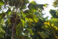 Юговосточные азиатские джунгли Стоковое фото RF