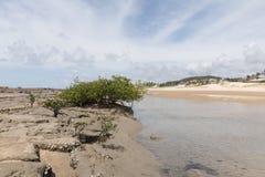 Южная береговая линия - натальная, RN, Бразилия Стоковое Изображение