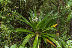 Южная вегетация, радуга скачет парк штата, Флорида, США Стоковое Изображение RF