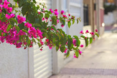Южная испанская улица Стоковое Изображение