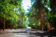Южная пальма пляжа покрыла переулок стоковое изображение rf