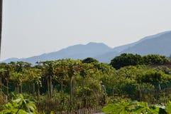 Южная ферма Китая с горами Стоковые Изображения RF