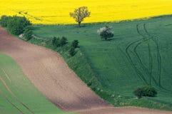 Южное Moravian fields, чехия земледелия, Европа, волны Стоковые Изображения