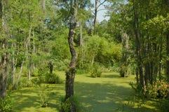 Южное swampland Georgia Стоковое Фото
