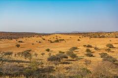 Южно-африканская зона пастбища Стоковые Изображения