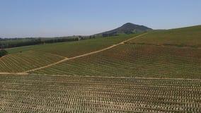 Южно - африканские виноградники акции видеоматериалы