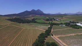 Южно - африканские виноградники видеоматериал