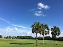 Южные болотистые низменности Флориды Стоковое Изображение RF