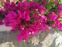 Южные цветки Стоковое фото RF