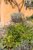 южный немецкий сад коттеджа Стоковое Фото