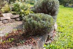 южный немецкий сад коттеджа Стоковые Фото