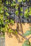 южный немецкий сад коттеджа Стоковые Фотографии RF