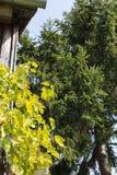 южный немецкий сад коттеджа Стоковое Изображение RF