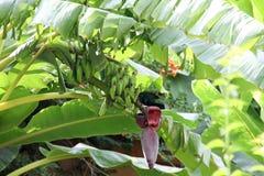 Южный, цветки, бананы стоковые изображения rf