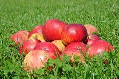 дюйм травы Крыма яблок августовский много один s малая Украина Стоковое фото RF