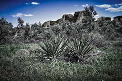 Юкка весной на ацтекских руинах Стоковые Изображения RF