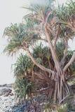 Юкка пляжа Стоковые Фото
