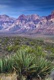 юкка утеса каньона красная Стоковая Фотография
