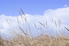дюна Стоковое Изображение