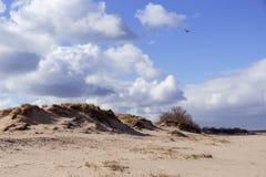 дюна Стоковые Изображения RF