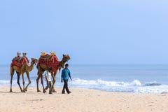 2 люд водя верблюдов Стоковая Фотография RF