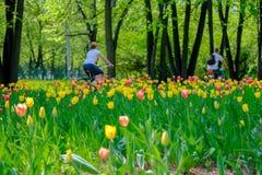 2 люд на улицах Москвы едут велосипеды на предпосылке тюльпанов Стоковое Изображение