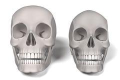 людские черепа Стоковое Фото