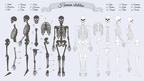 людской скелет черная белизна Имена косточек Стоковая Фотография RF