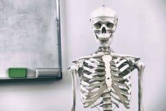 людской скелет стоковая фотография