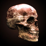 людской череп иллюстрация вектора