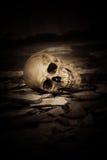 людской череп стоковые изображения rf
