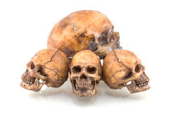 людской череп стоковая фотография rf