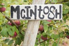 яблока потехи работа погоды лета сезона рудоразборки здесь outdoors теплая стоковые фотографии rf