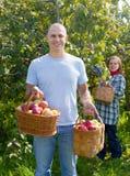Яблоки выборов человека и женщины Стоковое Изображение RF